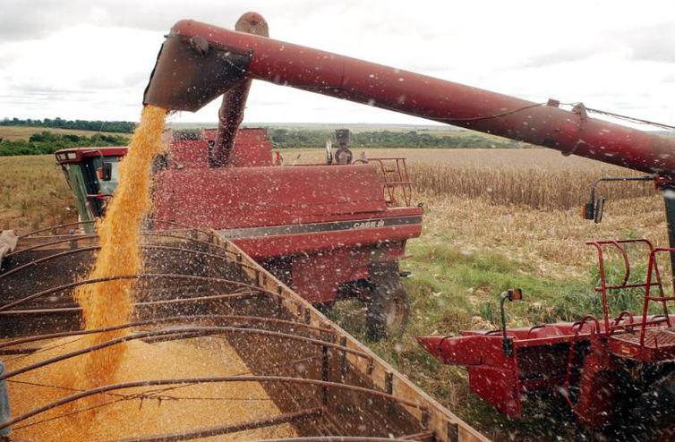 Safra de grãos deve crescer 3,1% em fevereiro
